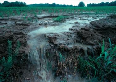 Raw manure erosion