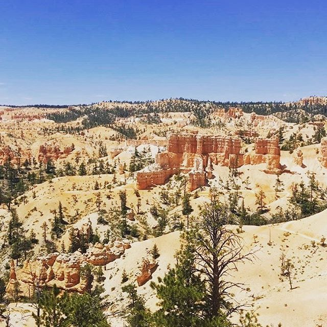#LWYLAW Wednesday! A beautiful photo of Bryce Canyon taken by our team member @decorworx_by_patrick #lovewhereyouliveandwork