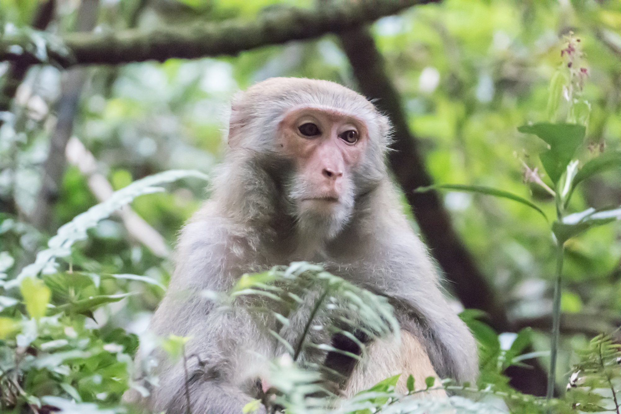 Many monkeys are seen on the forest floor
