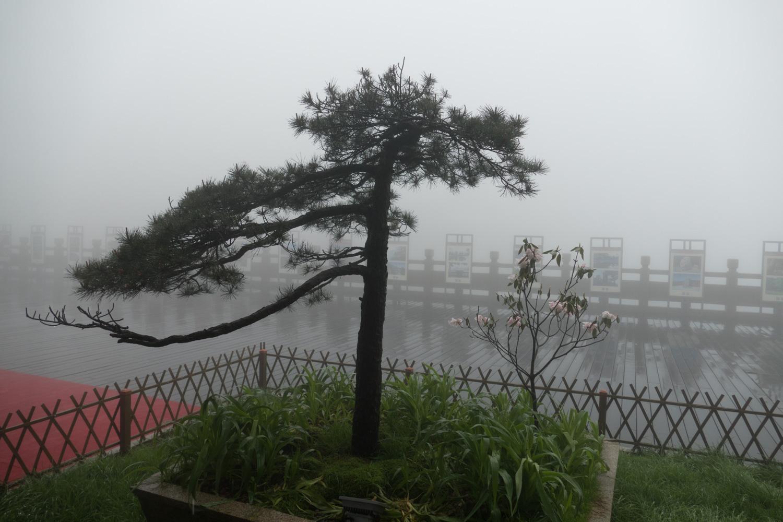 Rainy and foggy morning