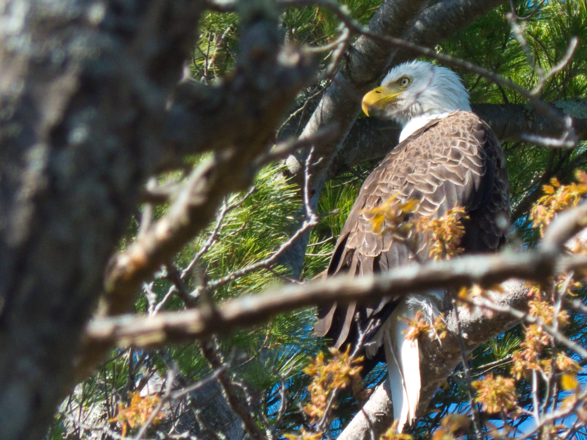 Keeping an eye on the nest
