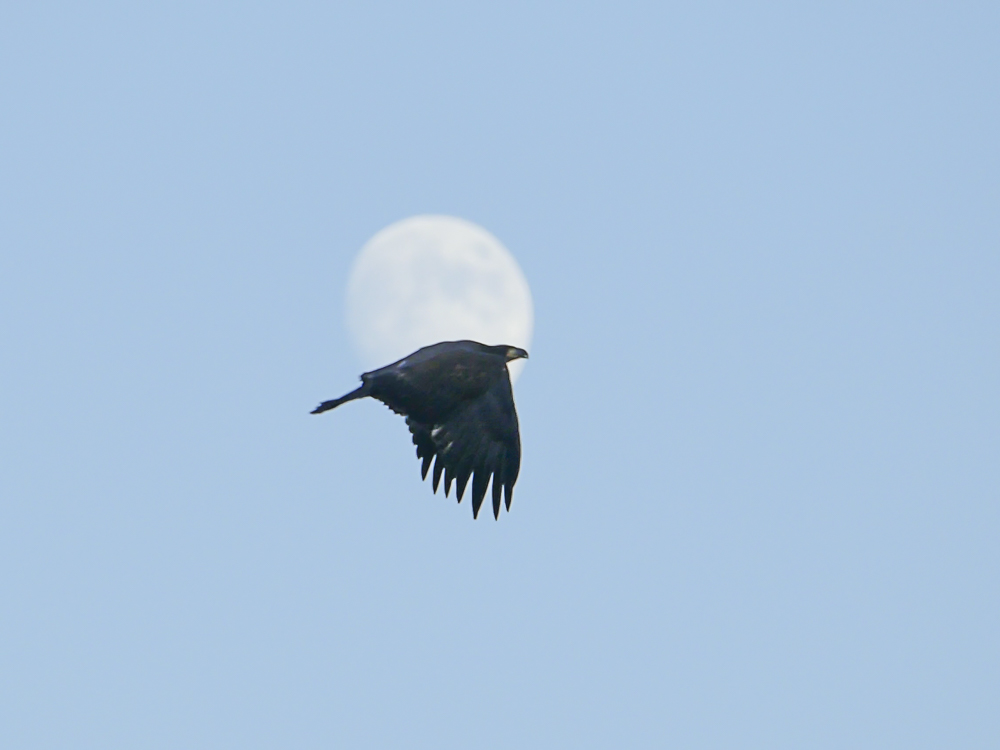 Fly me to the moon!