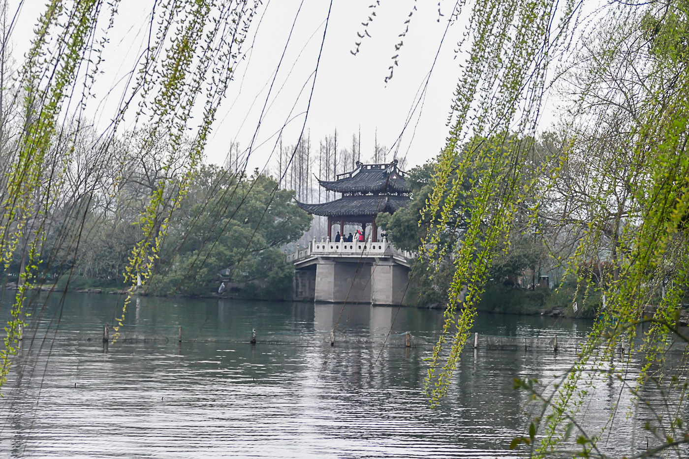 Willows and a bridge