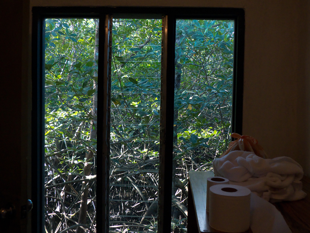 This is the view out of our bathroom at Il Guardino Airbnb. Note there are no curtains and the mangrove swamp view.