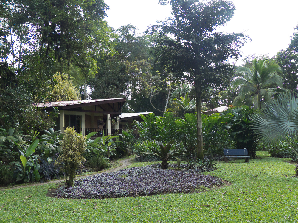 The grounds of our Airbnb at the Heliconia Island