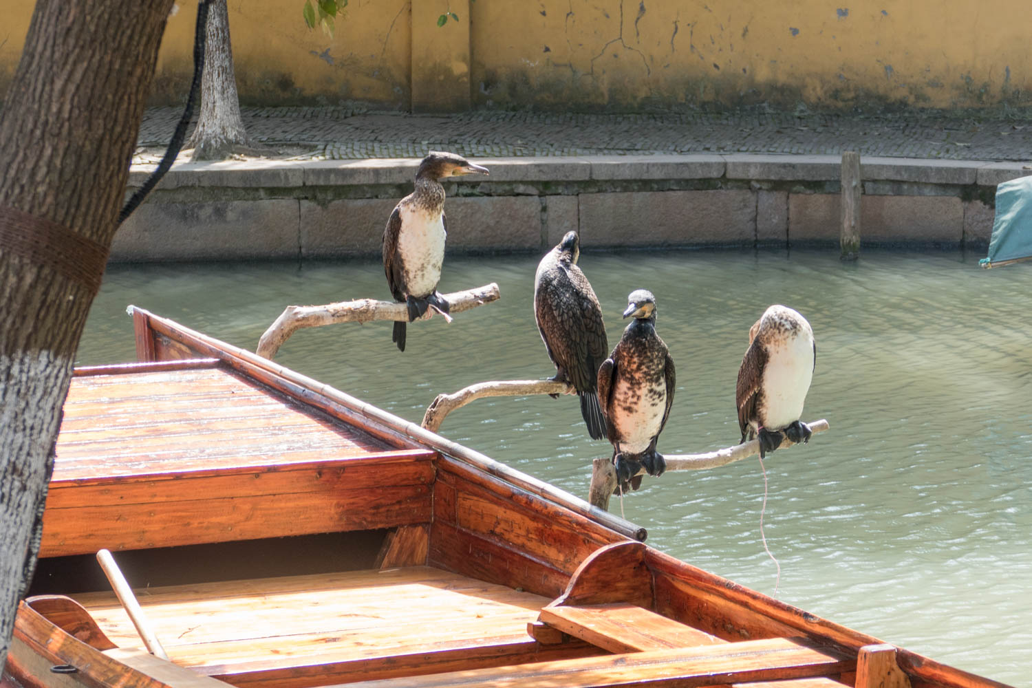 Cormorants waiting for action. When I took the picture a lady came up and said I wasn't allowed to do that unless I paid a fee.