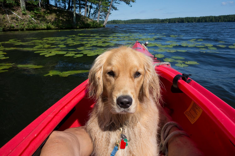 Maple enjoying the kayak ride