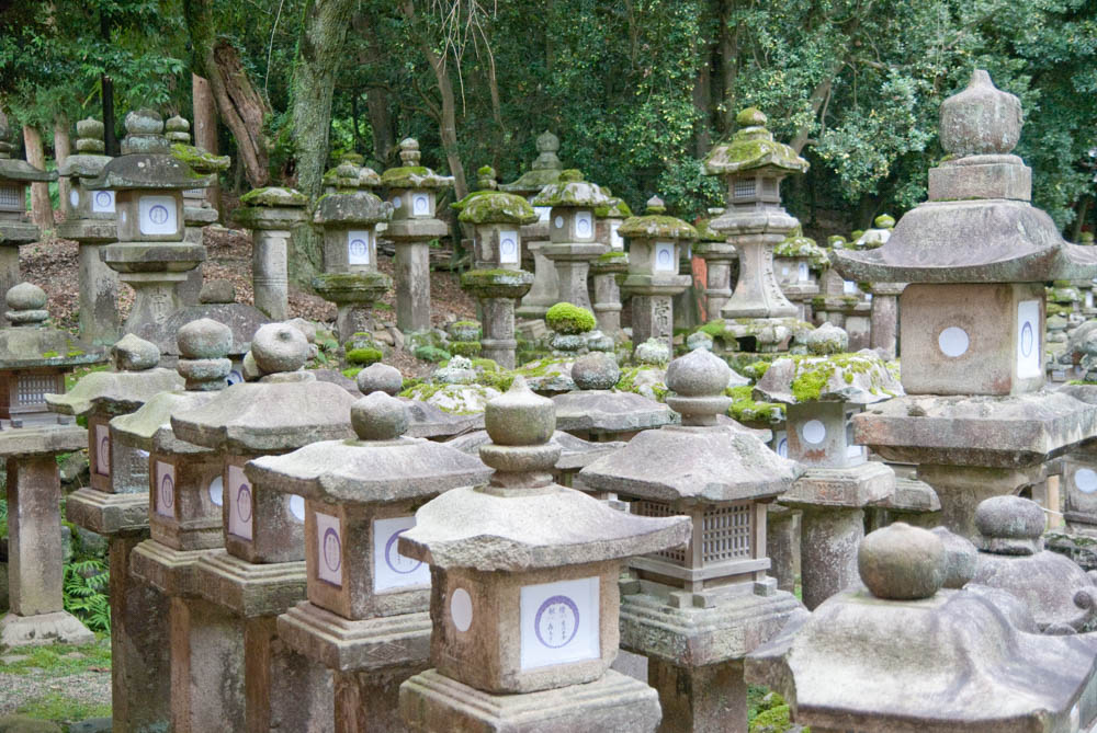 Forest of stone lanterns in Kasuga shrine