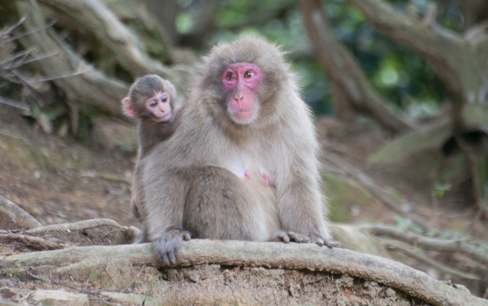 Mother and child in Iwatayama Monkey Park