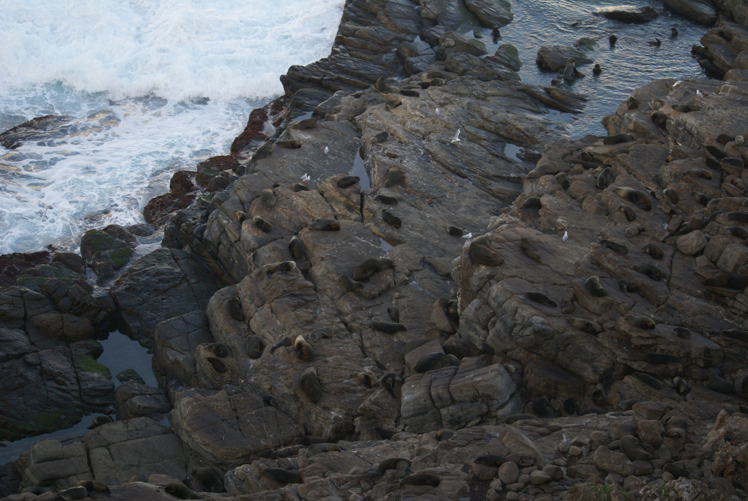 Fur seal colony near Admiral's arch