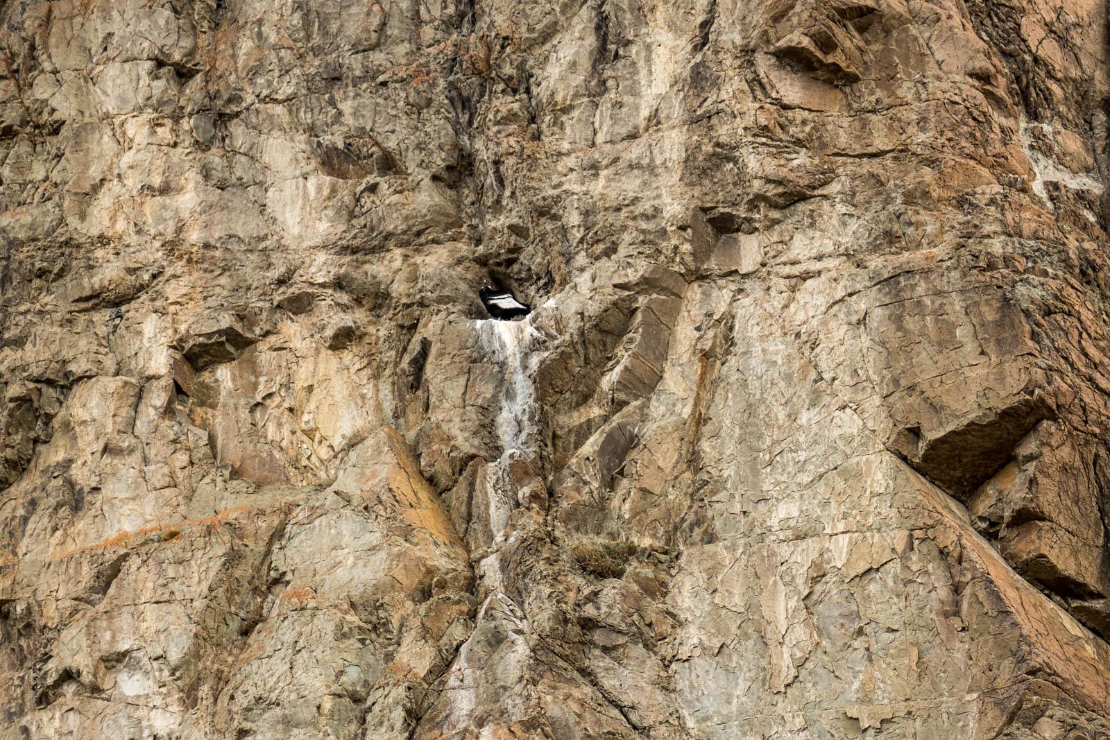 Condor on the nest on the hike to Laguna Capri