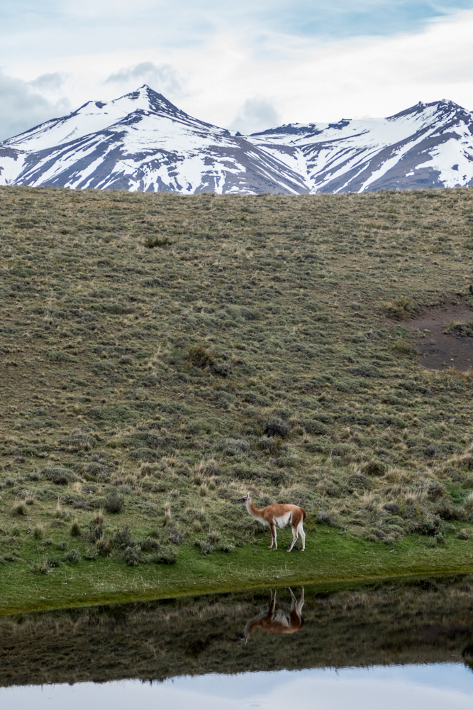 Andean tableau: rugged mountain peaks, laguna and guanaco with reflection