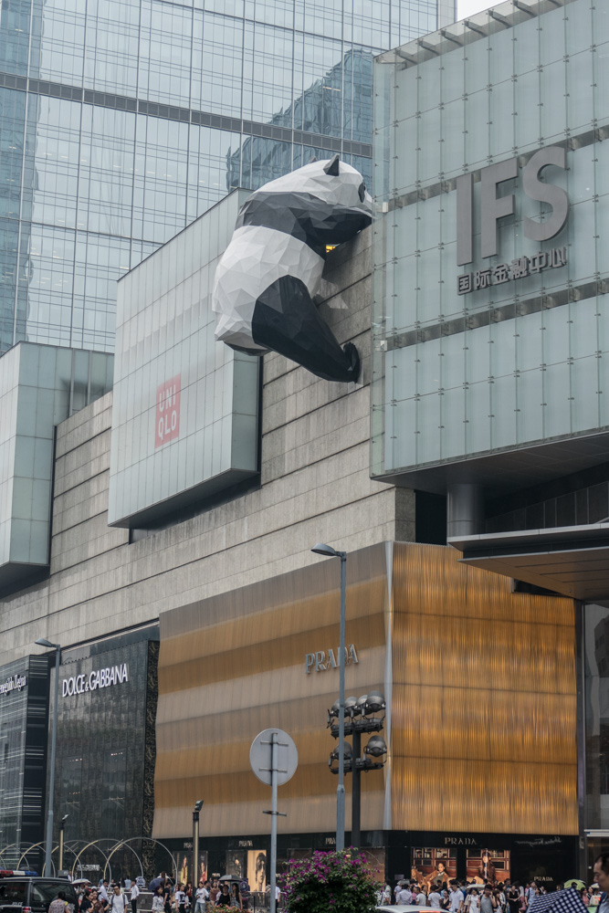 Panda on the loose in downtown Chengdu!!