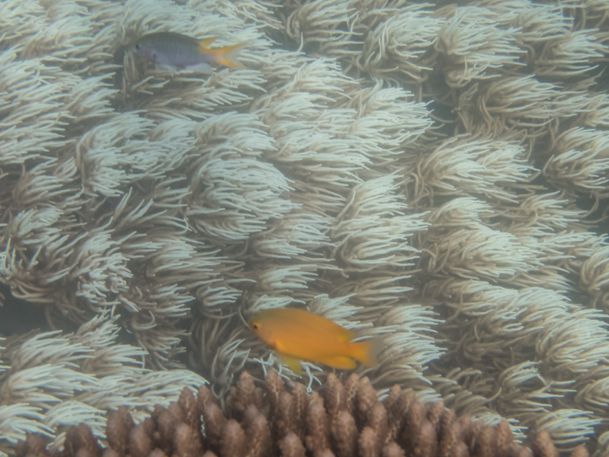 The current can be quite strong in some parts of the reef