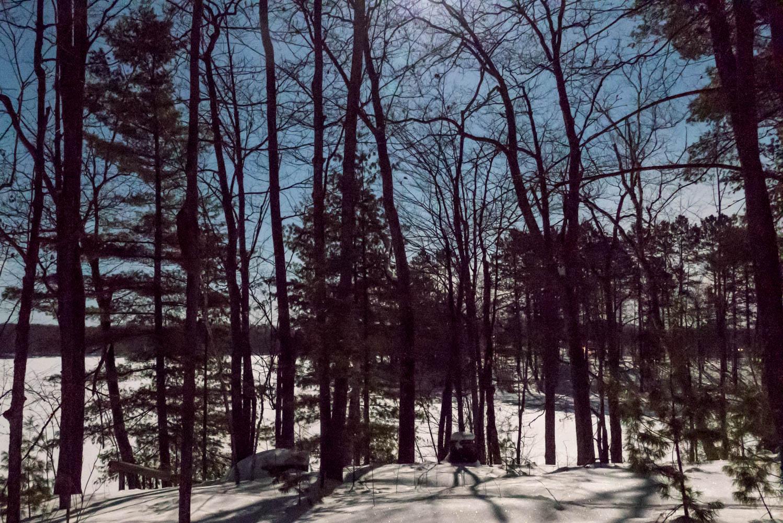 Moon lit woods