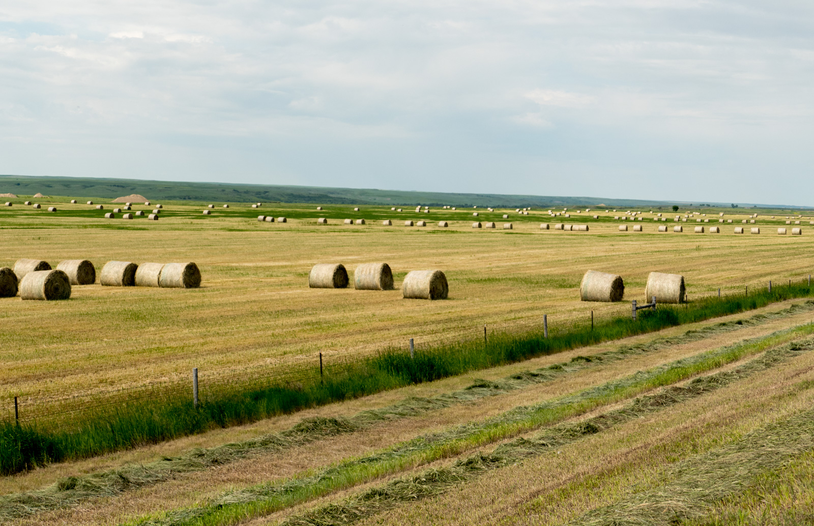 Making hay on the plains