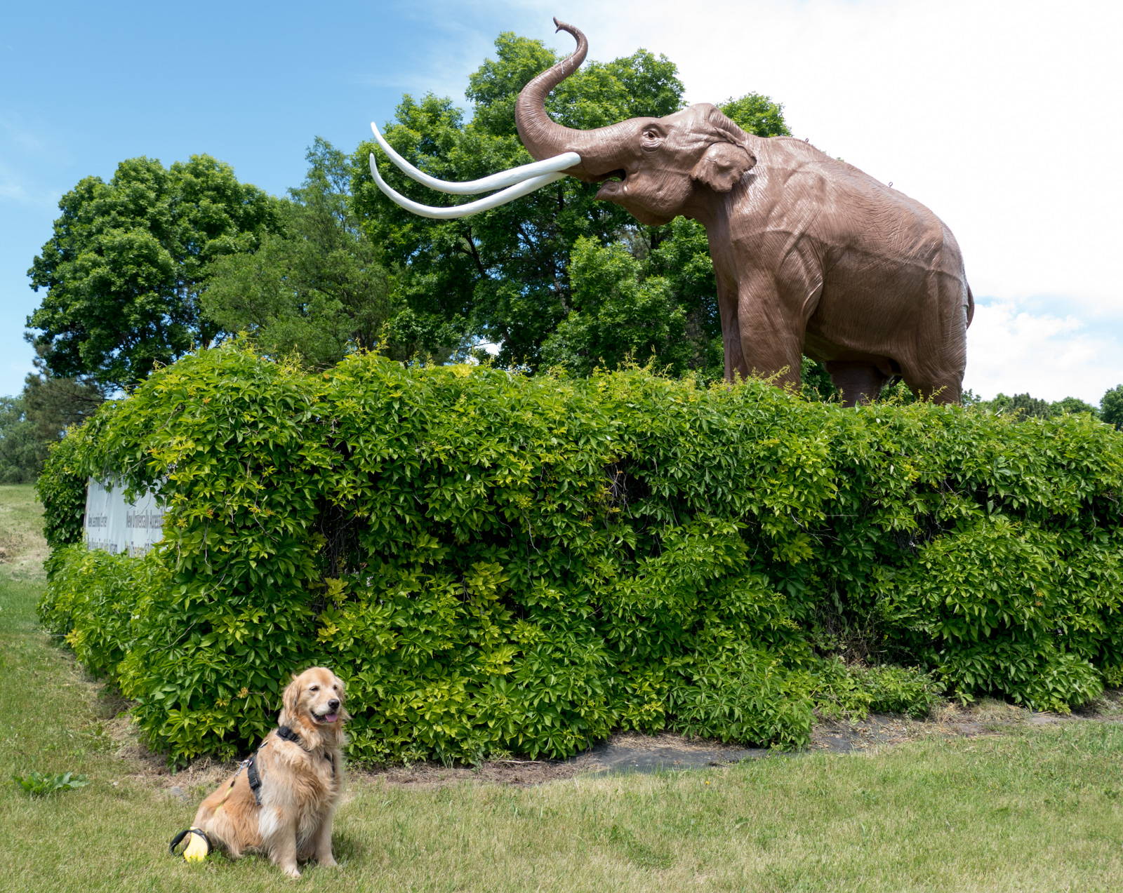 Maple is not impressed with the mammoth.