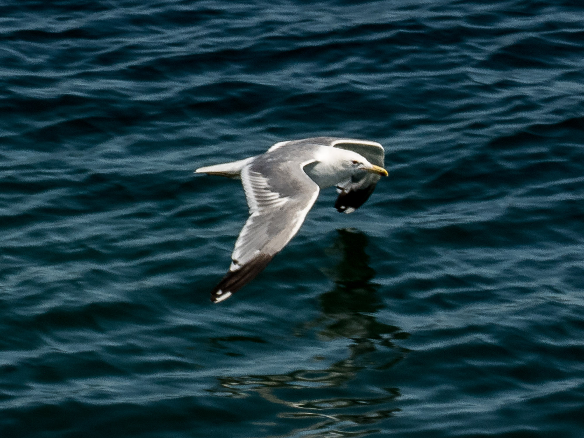 Gull from the ferry