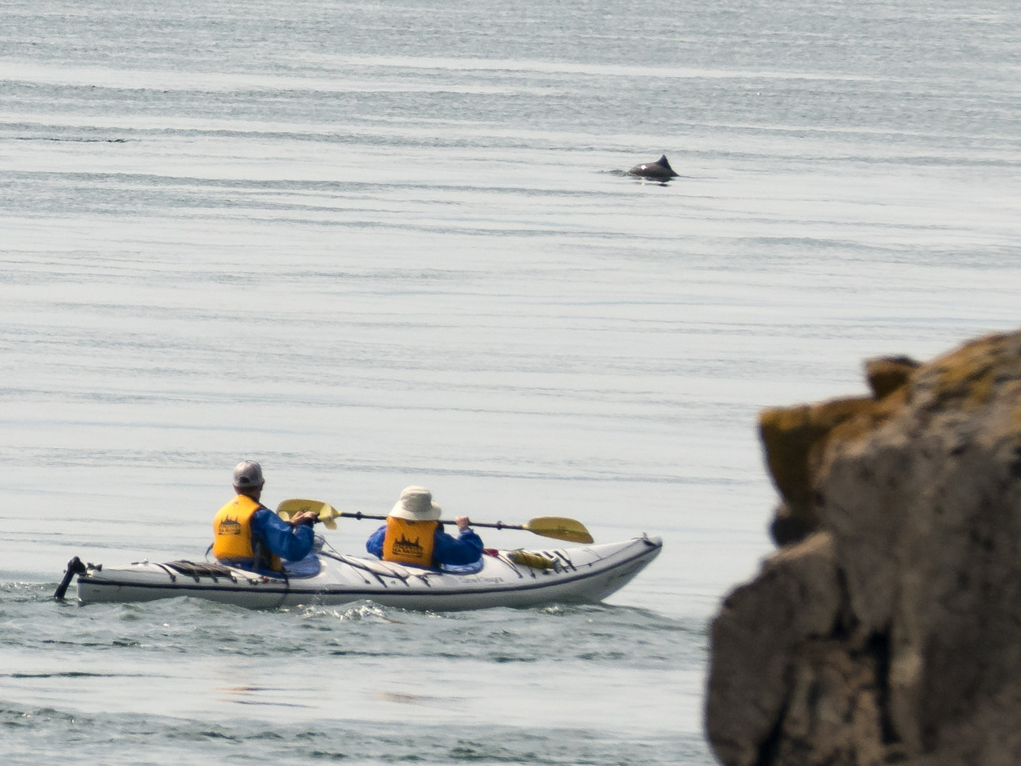 Kayakers and porpoise from Lime Kiln State Park