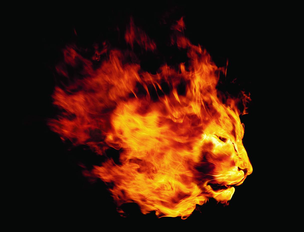 Lion_on_fire.jpg