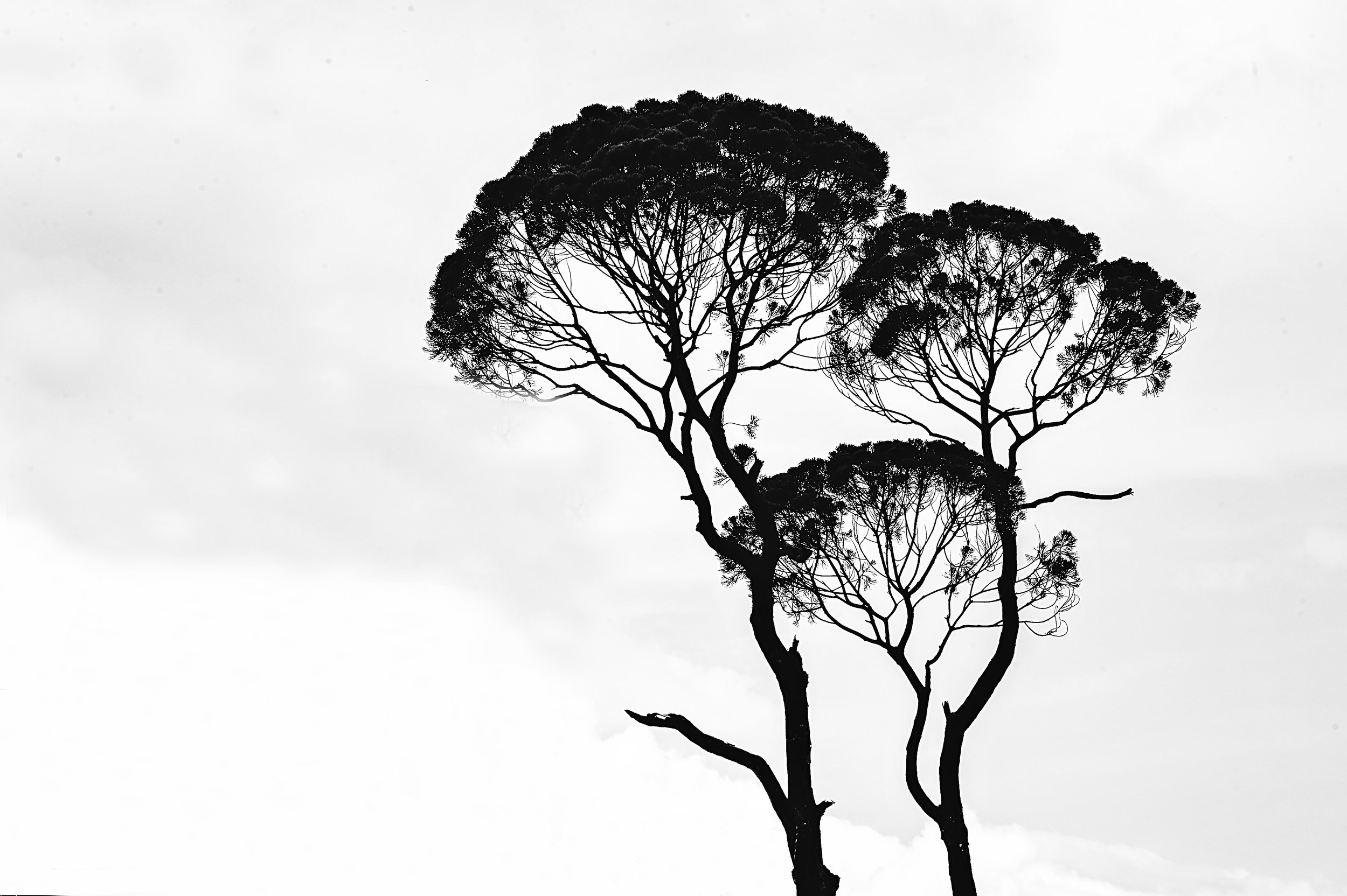 art-black-and-white-branches-962312.jpg