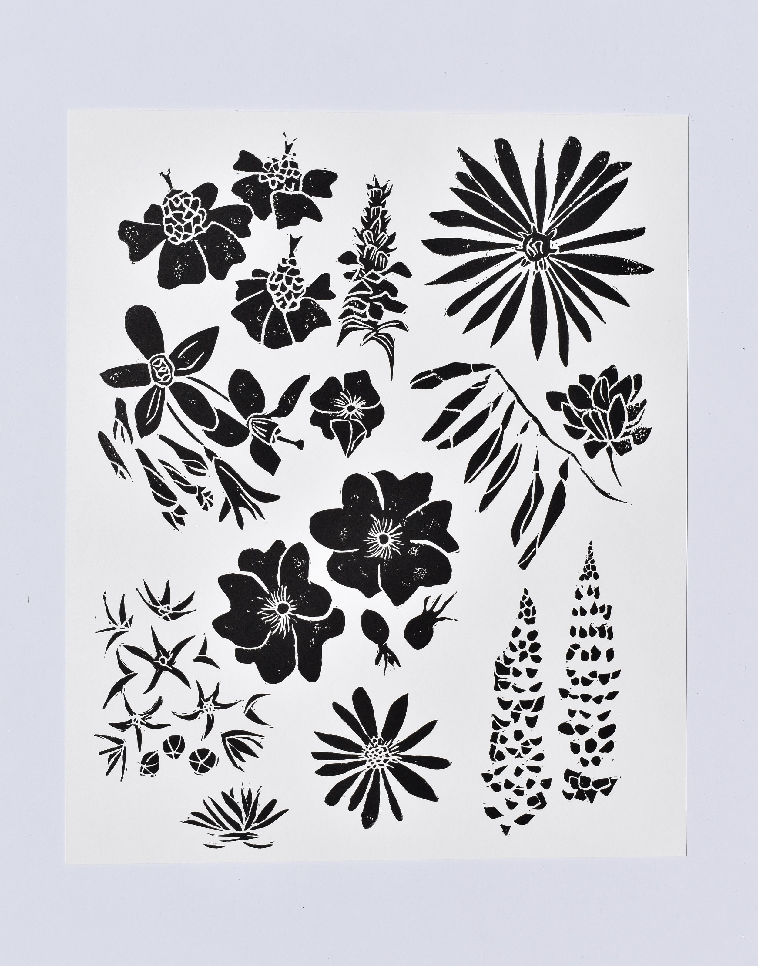 Oregon Wildflowers, 2017