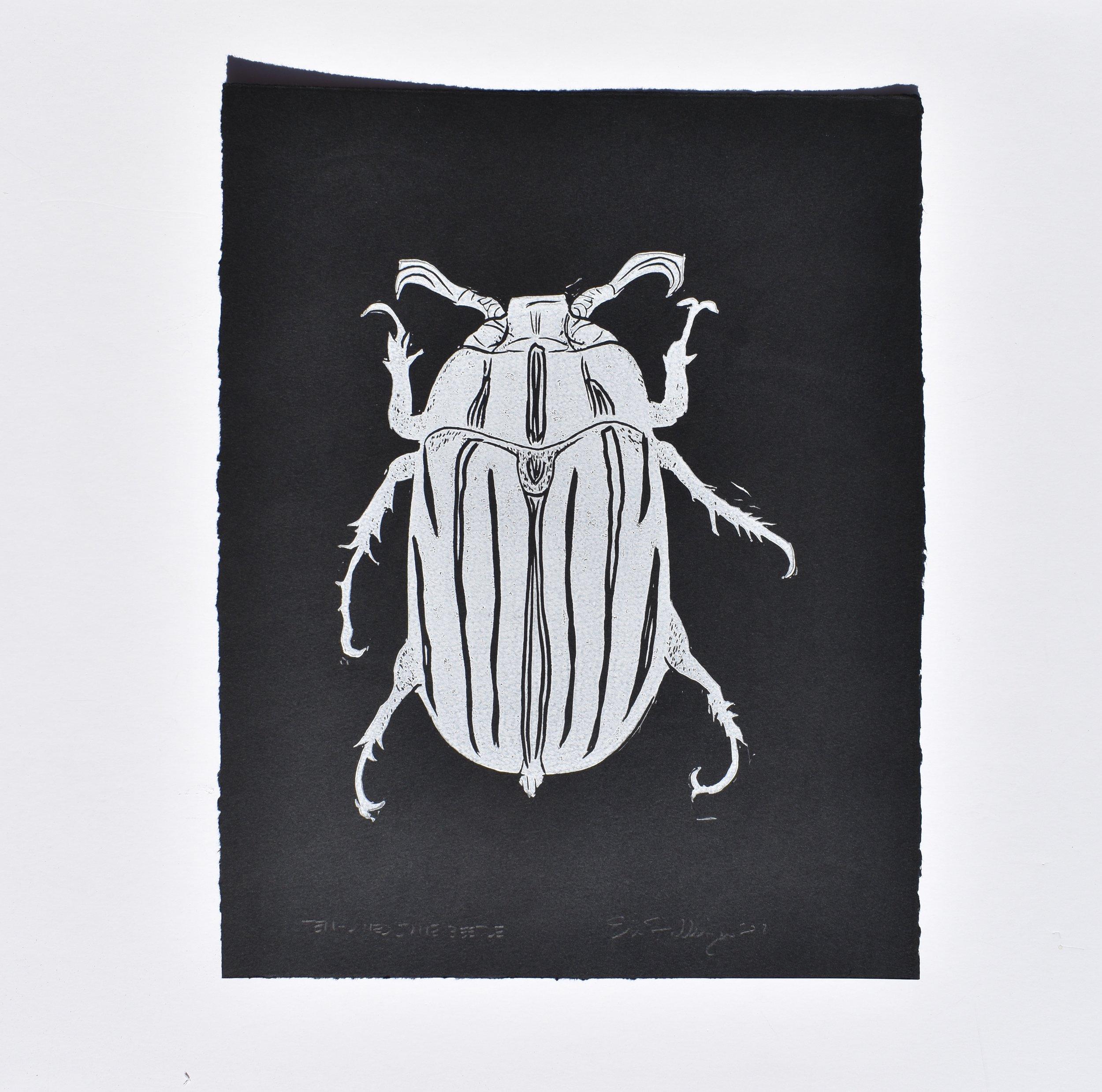 Ten-Lined June Beetle, 2018
