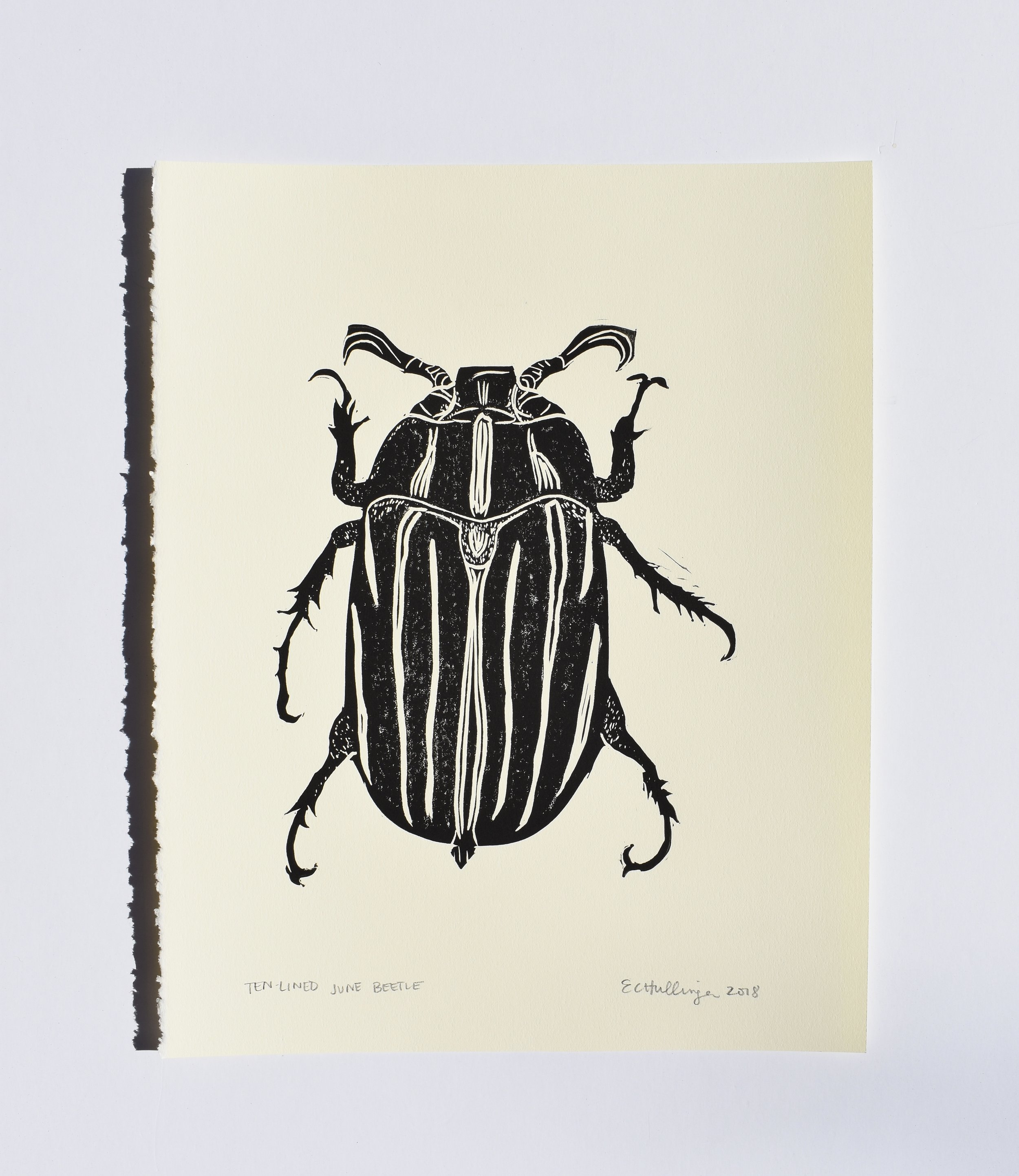 Ten-Lined June Beetle, 2018