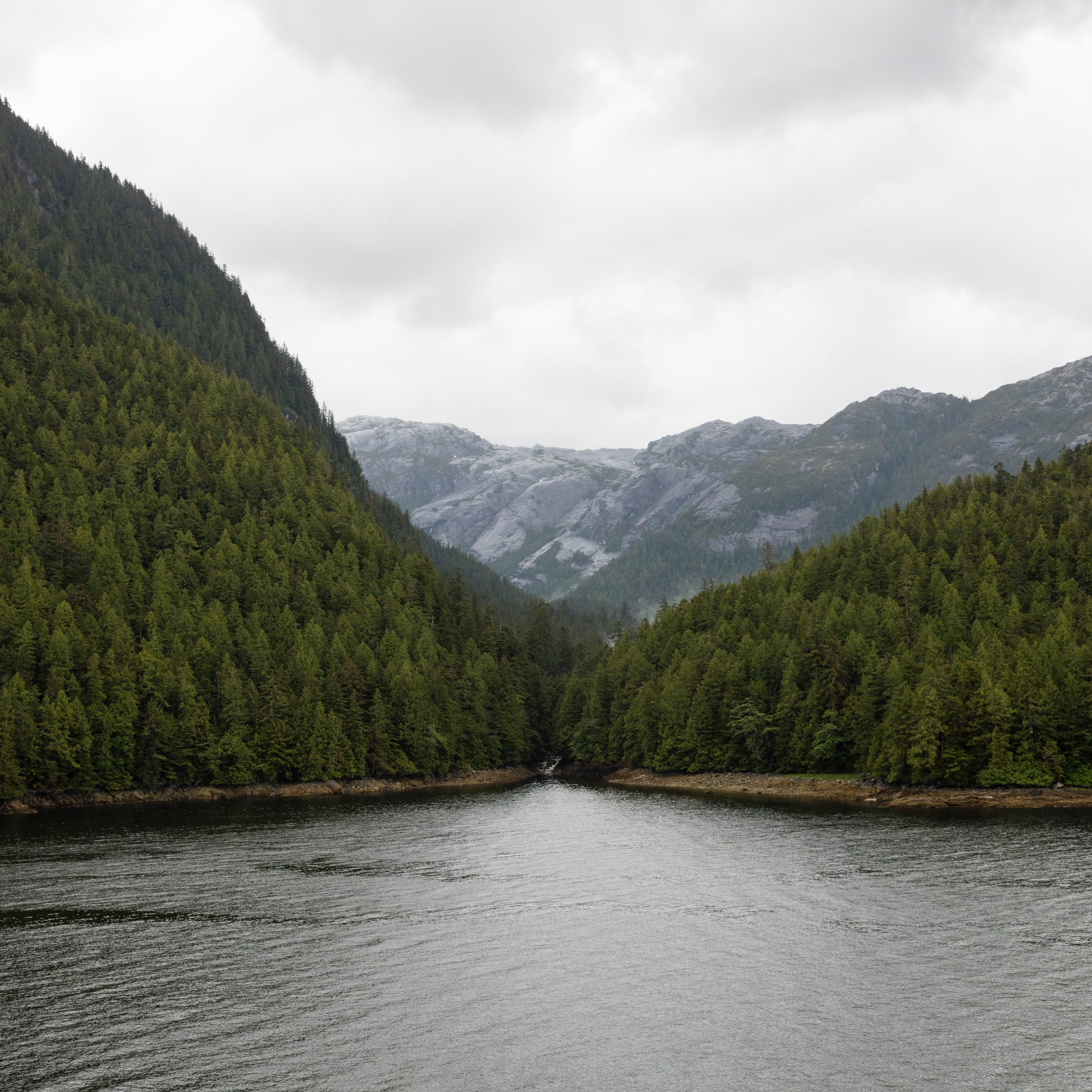 tongass forest (2).jpg
