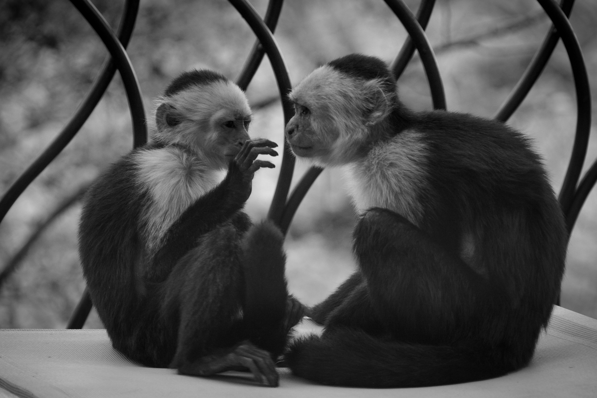monkeys -3300.jpg