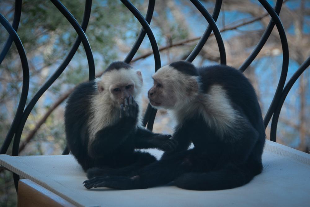 monkeys-1-2.jpg