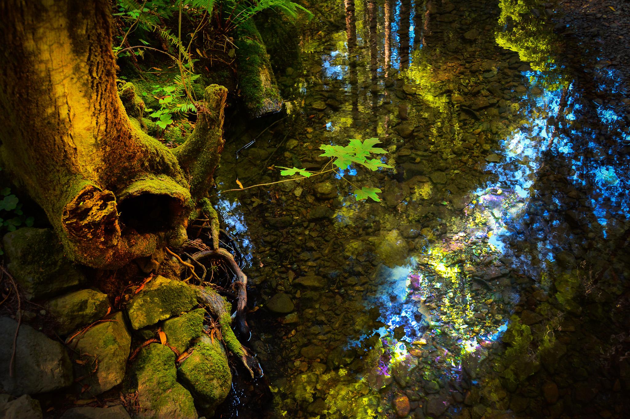 treefairy sgrb-0602.jpg