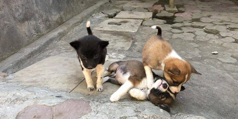 TVOF-Blog-BALI DOGS2.jpg