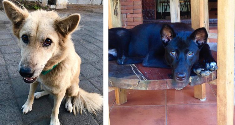 TVOF-Blog-BALI DOGS3.jpg