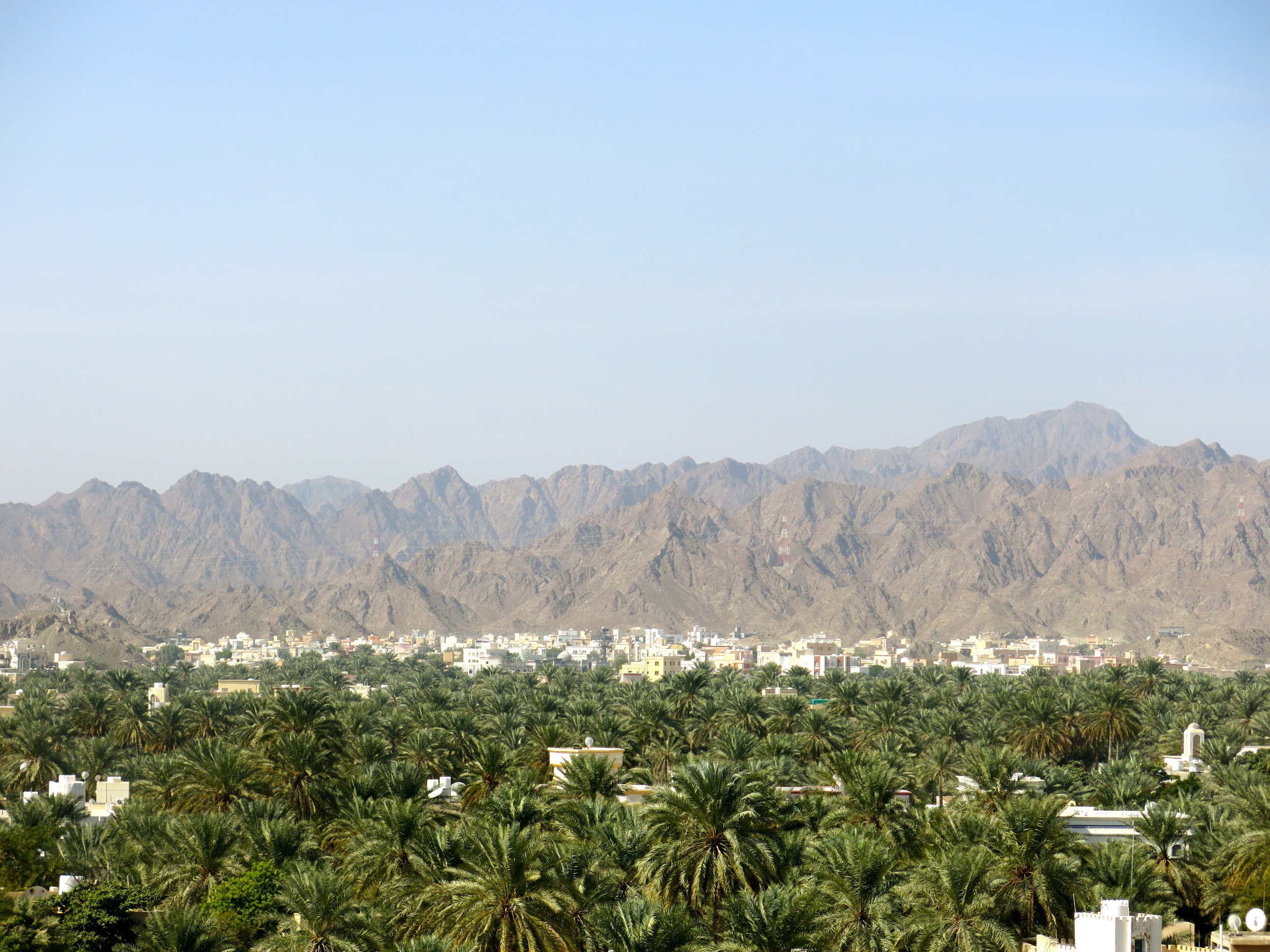 Panorama from the fortress with scores of date palm-trees