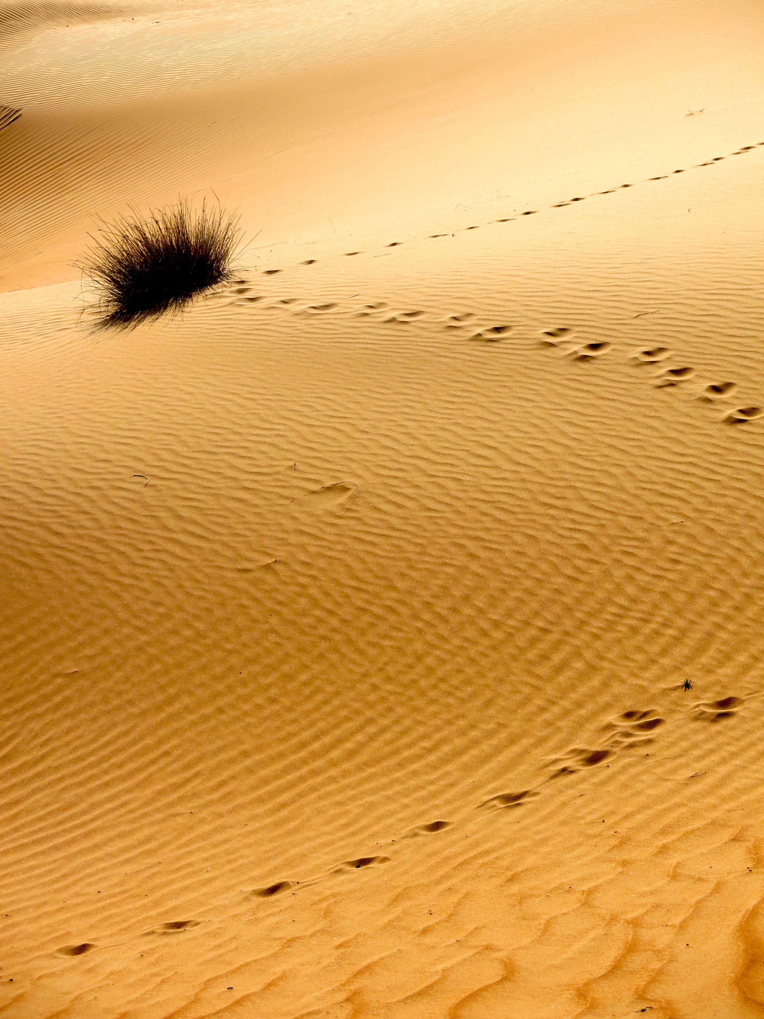 Red sands dunes in the Wahiba Sands desert