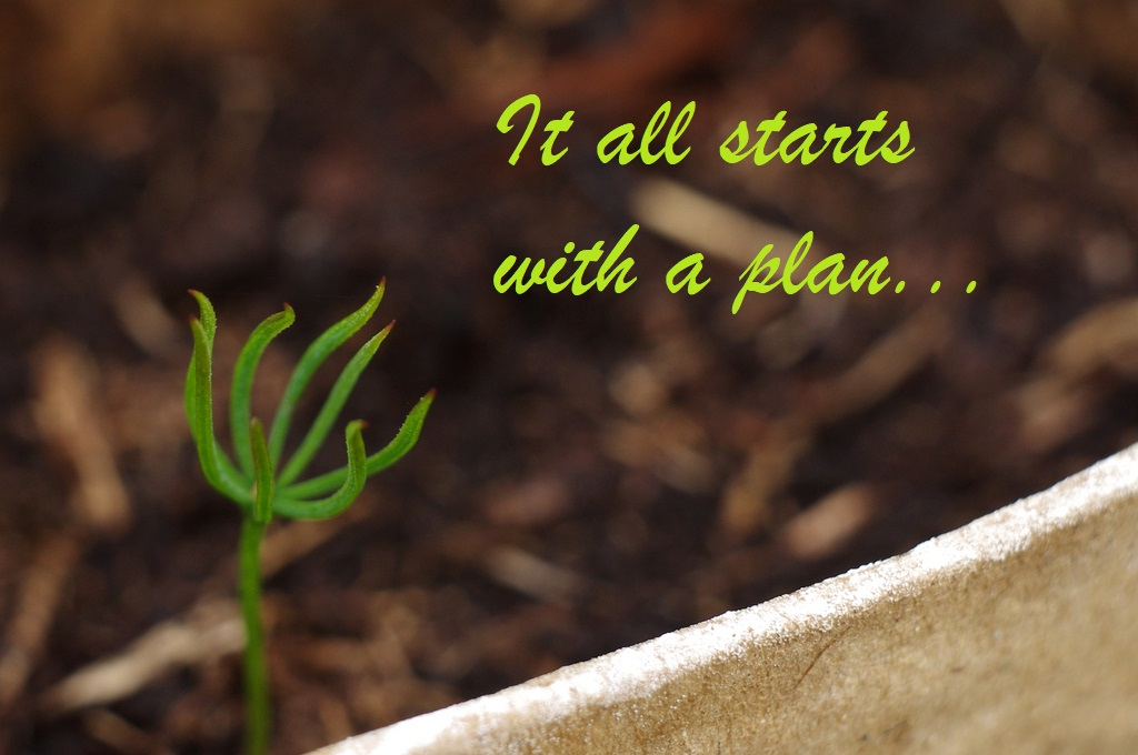 Content marketing starts like a seed