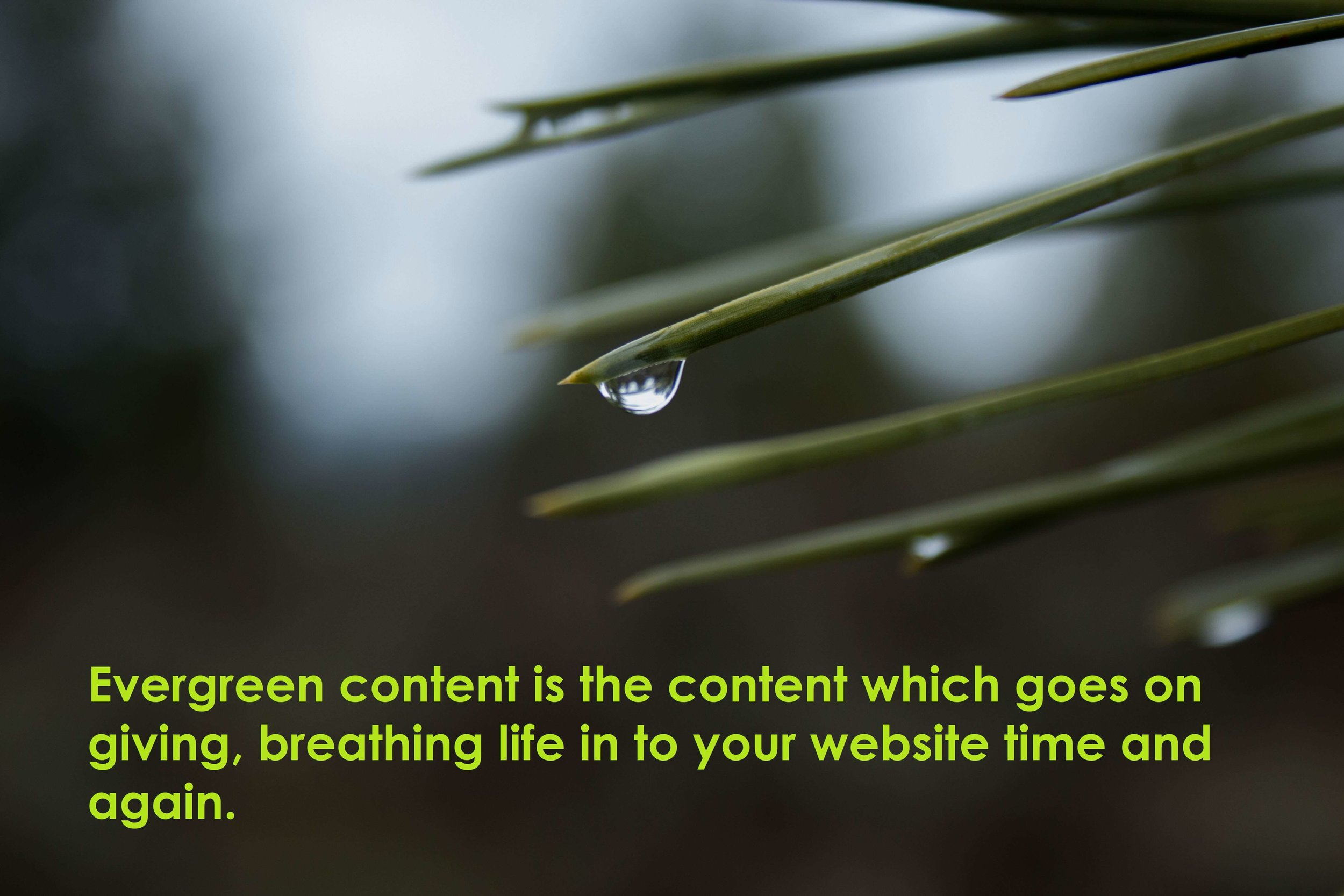 evergreen content boosts the success of your site
