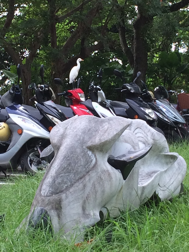 Cattle Egret standing atop student motorbike behind related sculpture