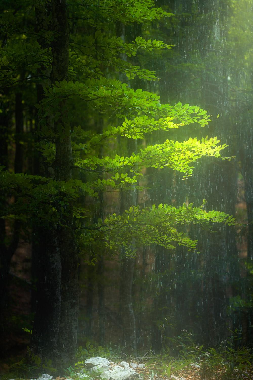 Trnovo Forest