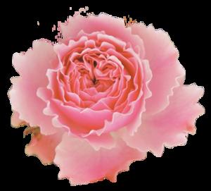 Eine-Blume-für-gute-Werbung.png