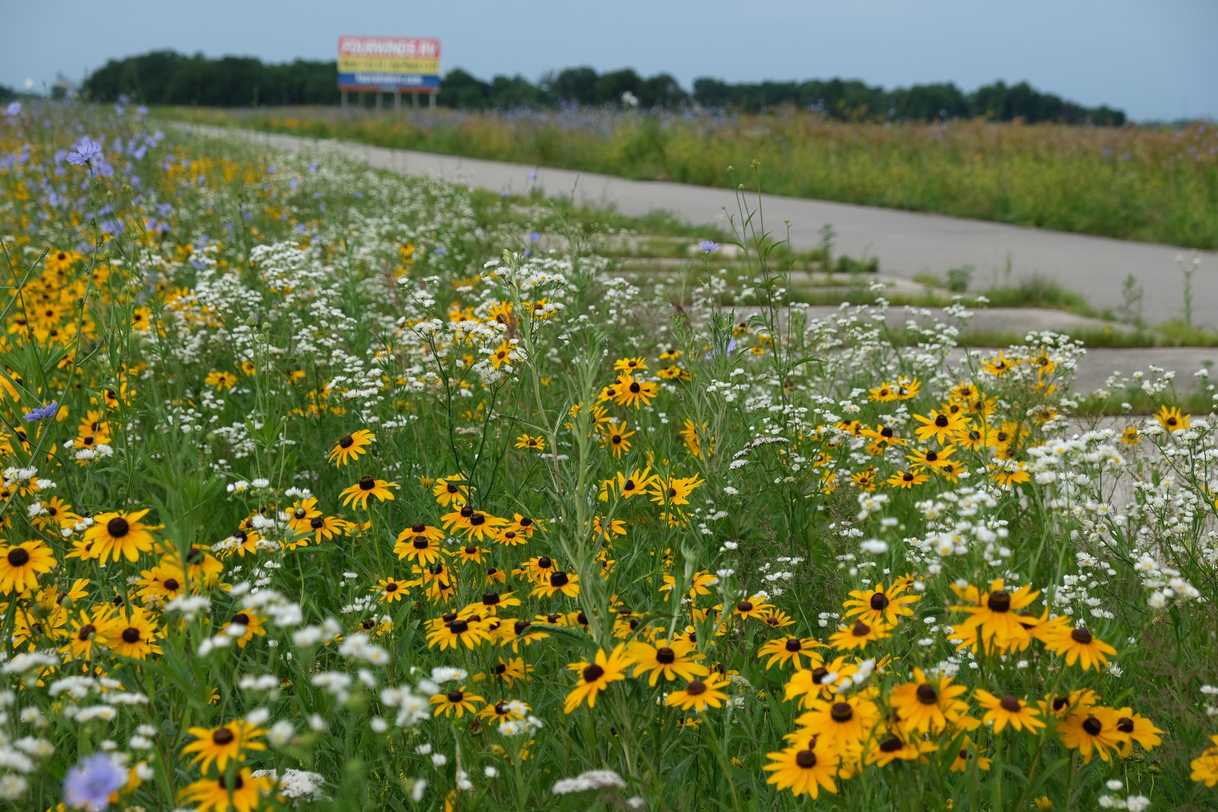 Wildflower verges. Great to fall into.