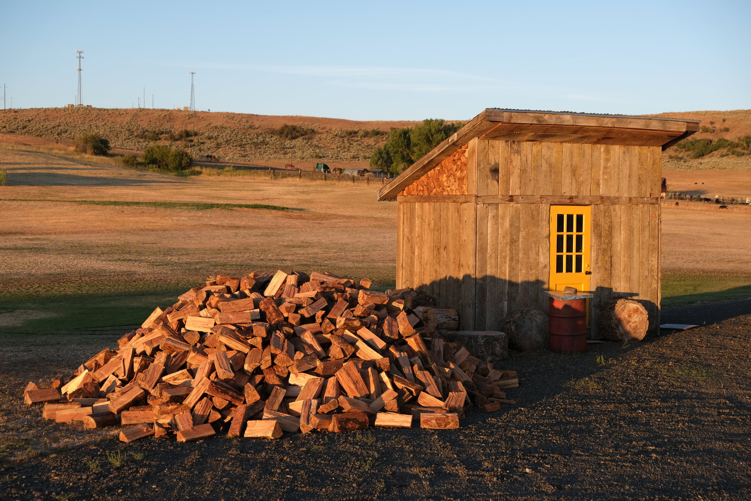 Log pile looking gorgeous in the flattering dawn sun