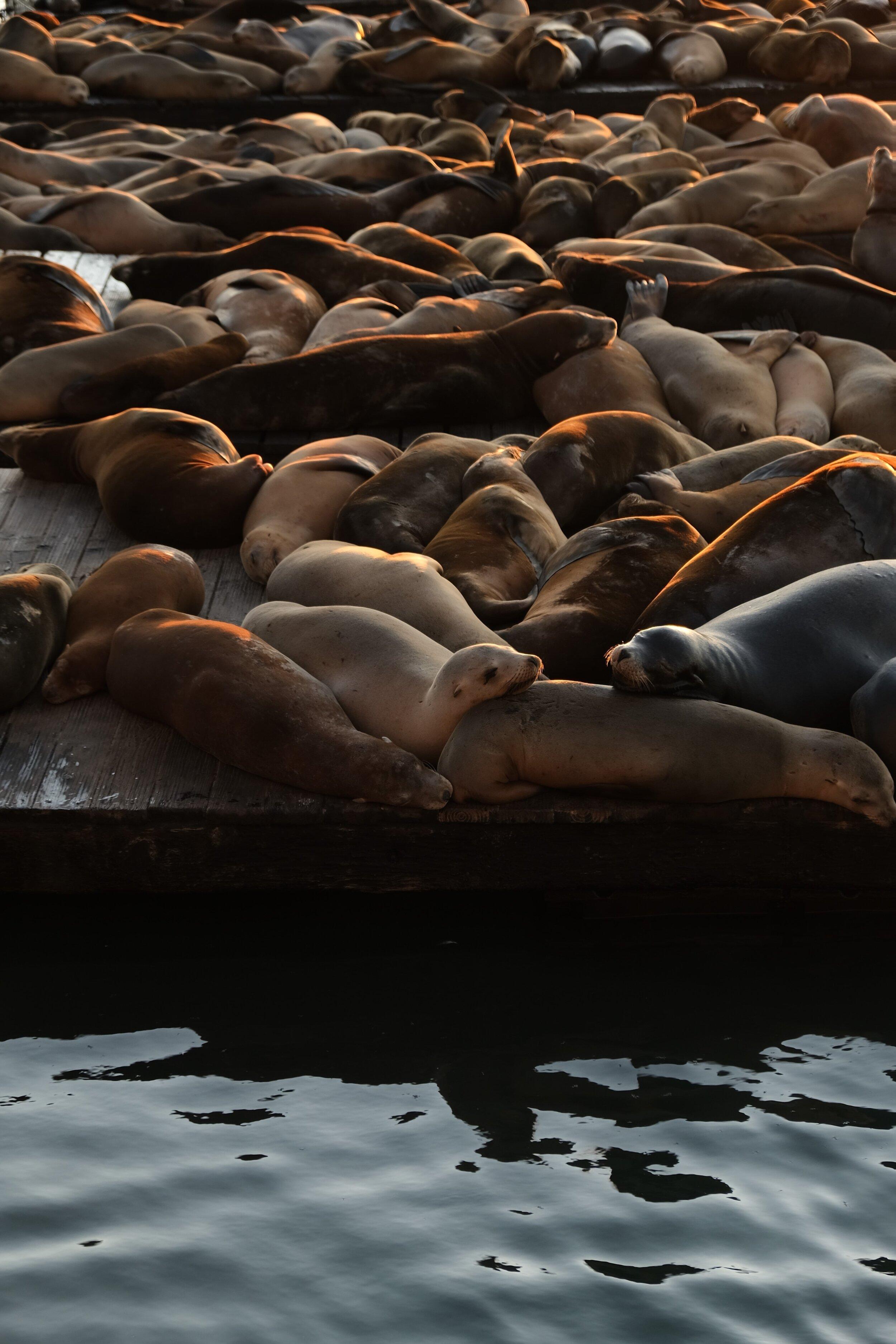 Even felons need sea lions