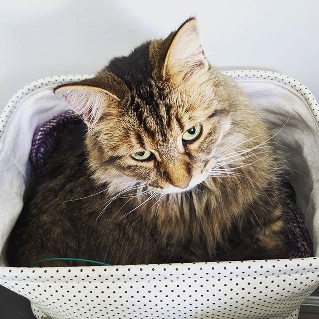 Cat in a knitting basket