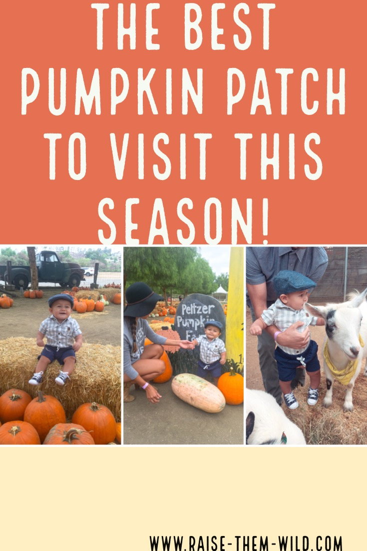 The best pumpkin patch to visit!