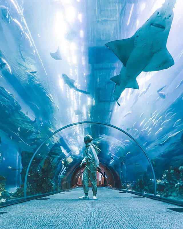 We went to the @dubaiaquarium! This place has been on my list of places to go for so long😍. FINALLY! Seeing all the fish and sharks has been amazing. I like marine life🦈🐠🐟. .  With @salima_salei💖
