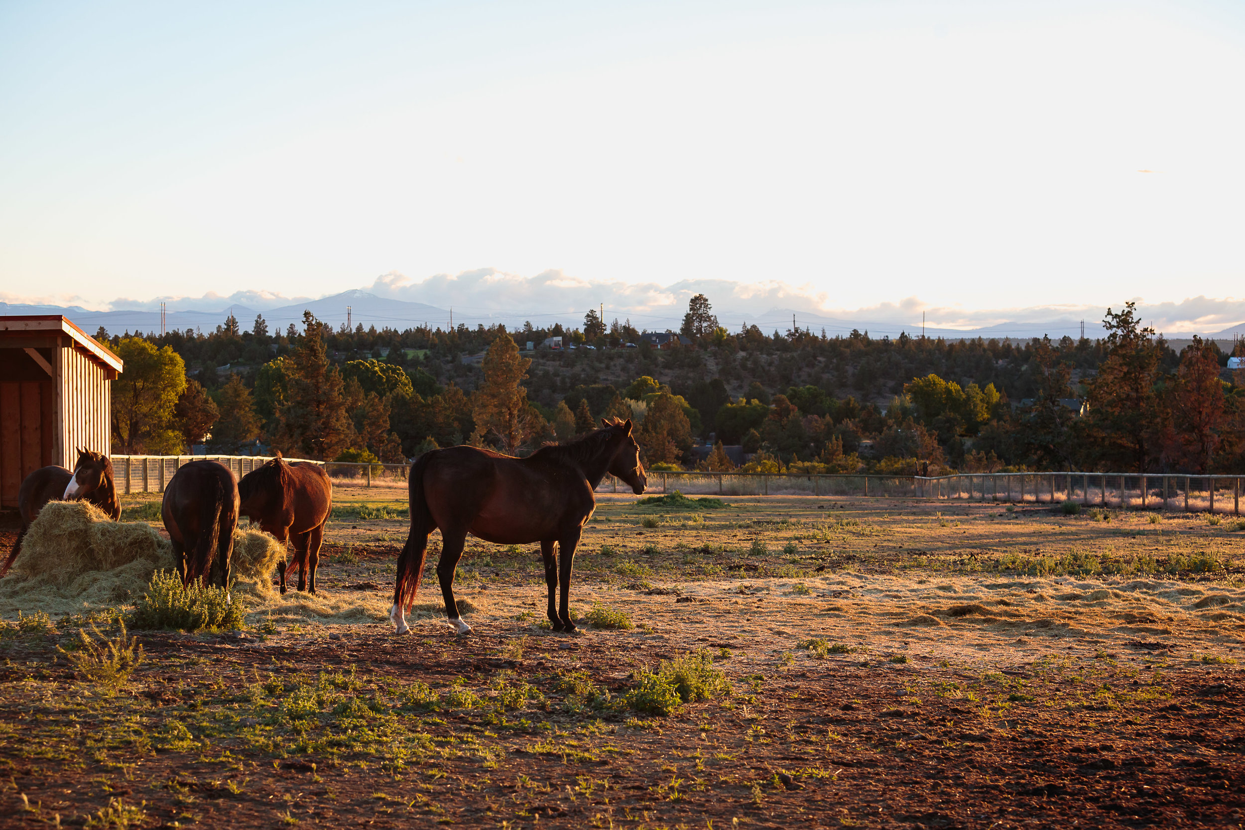 The growing herd at HeartSpace Horse Sanctuary