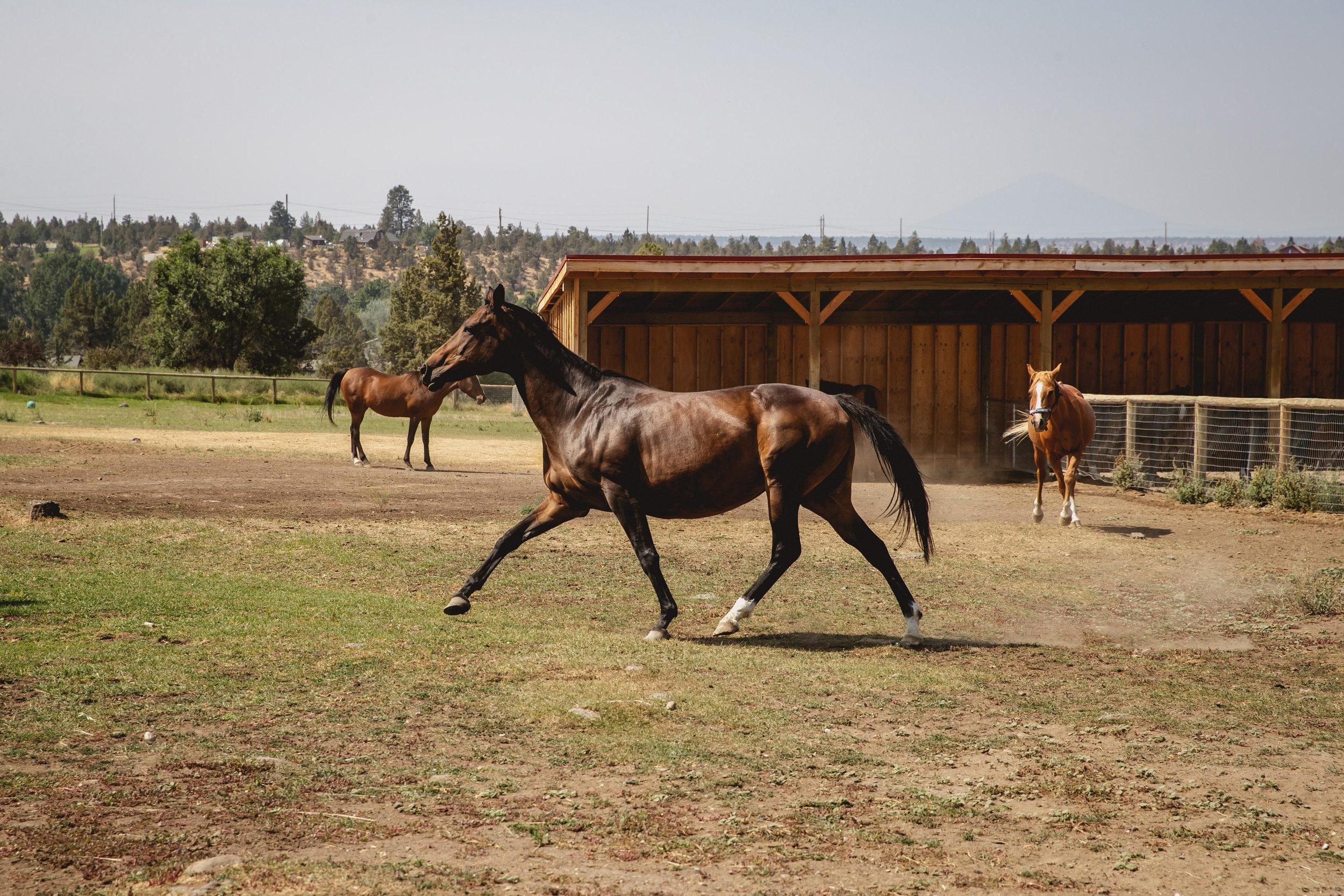 Ali strutting around HeartSpace Horse Sanctuary in Redmond, Oregon.