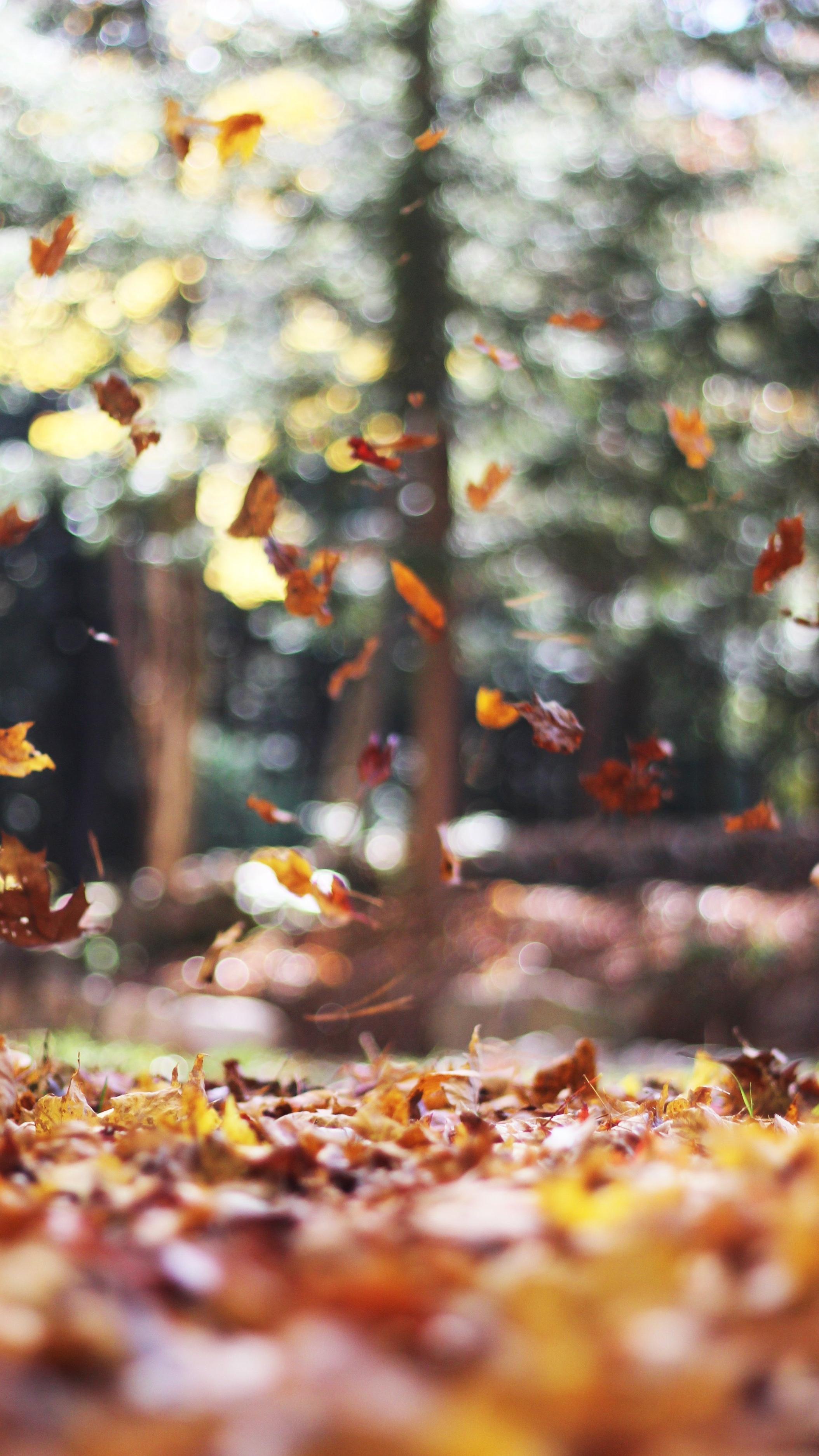 DOBBIAMO SAPERE CHE: L'autunno è la stagione in cui i raggi UVA sono più deboli - A stimolare la produzione di melanina, sono sopratutto i raggi UVA ovvero i raggi ultra violetti lunghi. La nostra pelle non ha scampo dai raggi UVA, la particolarità di questi raggi è che oltrepassano nubi, vetri, cosmetici (come fondotinta) e le più basse protezioni solari. Questi raggi sono la causa delle Macchie Solari.Durante il periodo estivo i raggi UVA sono più potenti, mentre durante l'Autunno/Inverno diminuiscono la loro potenza. Il trattamento specifico di riduzione delle macchie richiede un periodo di tempo lungo. Deve durare tutto il periodo di ricambio della nostra pelle ovvero circa 5 mesi. L' Autunno è il momento migliore per iniziare un trattamento e combattere efficacemente le macchie. Un periodo di tempo molto lungo (Autunno e Inverno) in cui i raggi UVA sono ai minimi livelli di potenza è una tregua per la nostra pelle e un'ottimo punto di partenza per la buona riuscita del trattamento.